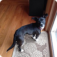 Adopt A Pet :: Frankie - Rochester, MN
