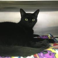 Adopt A Pet :: Kylo - Hampshire, TN