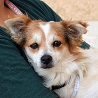 Adopt A Pet :: Pepe - Palmdale, CA