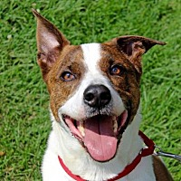 Adopt A Pet :: Tyler - West Chester, PA