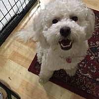 Adopt A Pet :: Gabby - Fountain Valley, CA