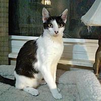 Adopt A Pet :: Bryson - Columbus, OH