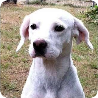 Pointer Mix Dog for adoption in McCormick, South Carolina - Jesse