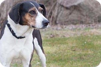 Hound (Unknown Type) Mix Dog for adoption in Novelty, Ohio - Utah