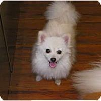 Adopt A Pet :: IZABELLA - Hesperus, CO
