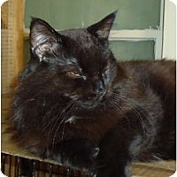 Adopt A Pet :: Binks - Elmira, ON