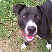 Adopt A Pet :: Savannah - Lynnville, TN
