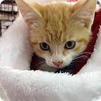 Adopt A Pet :: Chase - Aiken, SC