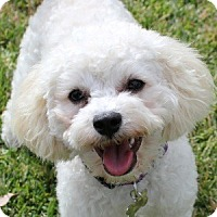 Adopt A Pet :: Lilly - La Costa, CA