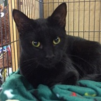 Adopt A Pet :: Moe - Saginaw, MI