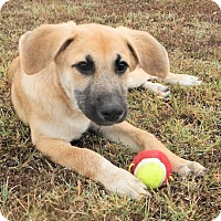 Adopt A Pet :: *Giselle - PENDING - Westport, CT