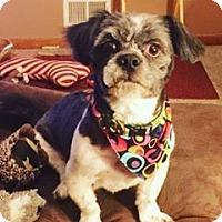 Adopt A Pet :: Grover - Emmett, MI