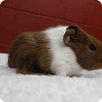 Adopt A Pet :: *Urgent* Sonny - Fullerton, CA
