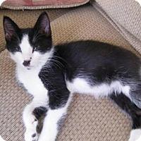 Adopt A Pet :: Porsha - Orlando, FL