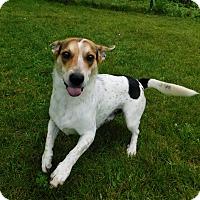 Adopt A Pet :: Chance - Lafayette, NJ