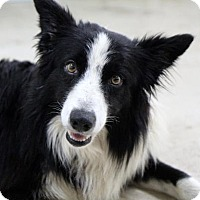 Adopt A Pet :: Jason - Picayune, MS