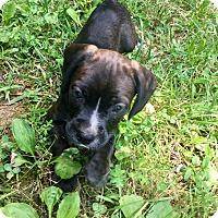 Adopt A Pet :: Gunther - Goodlettsville, TN