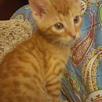 Adopt A Pet :: Fred - Covington, KY