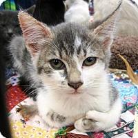 Adopt A Pet :: Miss Hemingway - Castro Valley, CA