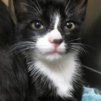 Adopt A Pet :: Morgan - Menomonie, WI