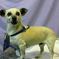 Adopt A Pet :: URGENT on 8/19@DEVORE San Bern - San Bernardino, CA