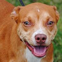 Adopt A Pet :: Max - Anniston, AL