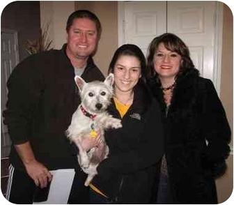 Westie, West Highland White Terrier Dog for adoption in Frisco, Texas - Winnie Adopted