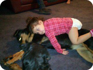 Rottweiler Dog for adoption in Gilbert, Arizona - Jazz
