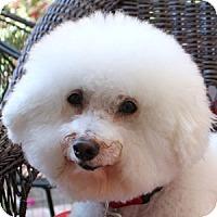 Adopt A Pet :: Jackson - La Costa, CA