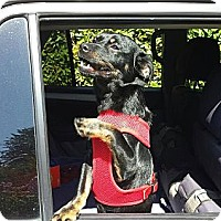 Adopt A Pet :: Oscar - Santa Barbara, CA