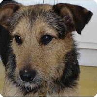 Adopt A Pet :: Chloe - Albuquerque, NM