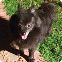 Adopt A Pet :: Skippy - Scottsdale, AZ