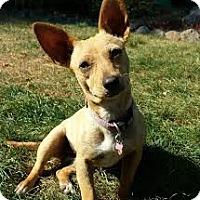 Adopt A Pet :: CALI - Kingston, WA