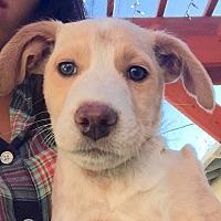 Adopt A Pet :: Eli - Long Beach, CA