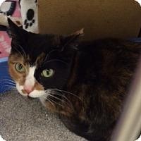 Adopt A Pet :: Kiara - Byron Center, MI