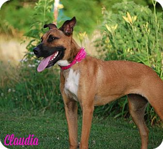 Boxer/German Shepherd Dog Mix Dog for adoption in Union City, Tennessee - Claudia
