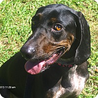 Adopt A Pet :: Atilla - Jacksonville, FL