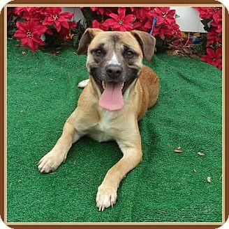 German Shepherd Dog/Terrier (Unknown Type, Medium) Mix Dog for adoption in Marietta, Georgia - AGGIE