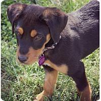 Adopt A Pet :: Adrian - Fredericksburg, VA