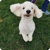 Adopt A Pet :: Lucky - Meridian, ID