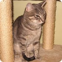 Adopt A Pet :: Suki - Colmar, PA