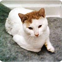 Adopt A Pet :: Chance - Cranford, NJ