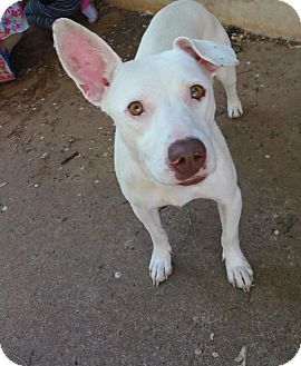 Terrier (Unknown Type, Small) Mix Dog for adoption in Broken Arrow, Oklahoma - Juna
