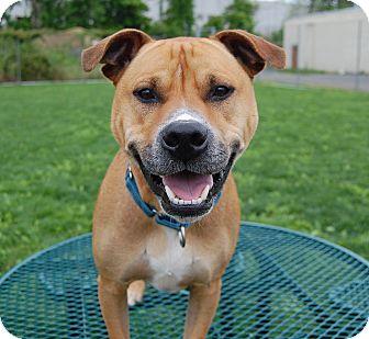 Labrador Retriever Mix Dog for adoption in Wilmington, Delaware - Patch