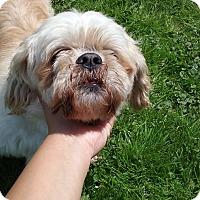 Adopt A Pet :: Bear-Adoption Pending - Union Grove, WI
