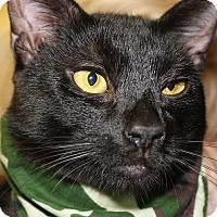 Adopt A Pet :: CLYDE - Clayton, NJ