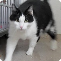 Adopt A Pet :: Kitty - Waupaca, WI