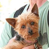 Adopt A Pet :: Elizabeth - Palmdale, CA