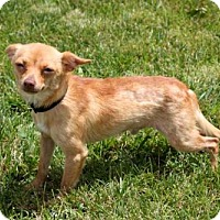 Adopt A Pet :: CARSON - richmond, VA