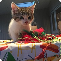 Adopt A Pet :: Tennessee - Geneseo, IL